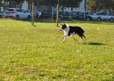 Cours d'Obeissance chien Gland