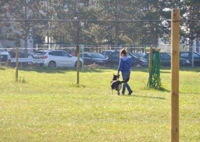 Cours d'Obeissance chien Rolle
