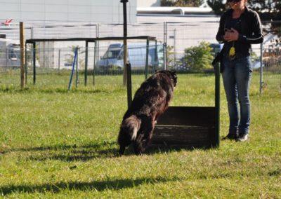 Cours d'Obeissance pour chien Coppet