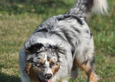 Garderie canine Gland