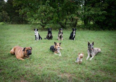 Garderie pour canin Nyon