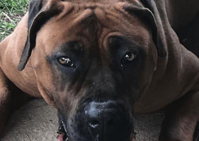 Obéissance des chiens, éducation canine à Gland