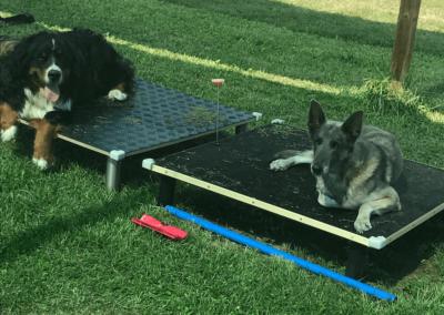 Obéissance des chiens, éducation canine